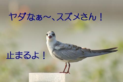 110_20121009191651.jpg