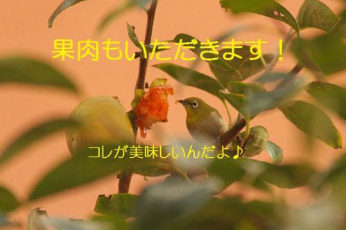 110_20121030223206.jpg