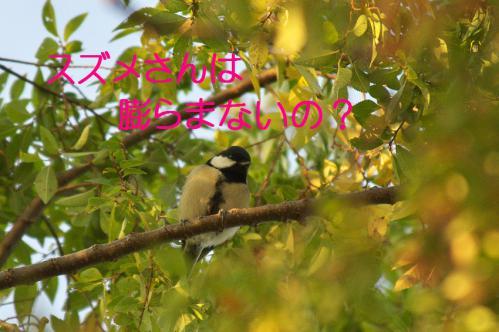 110_20121031214909.jpg
