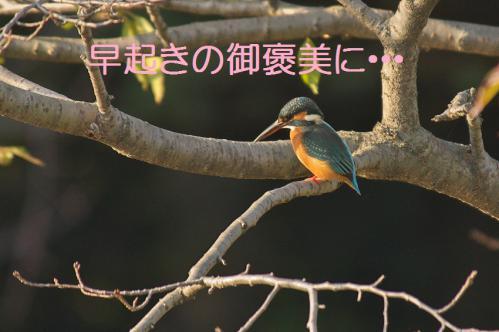 110_20121102220218.jpg