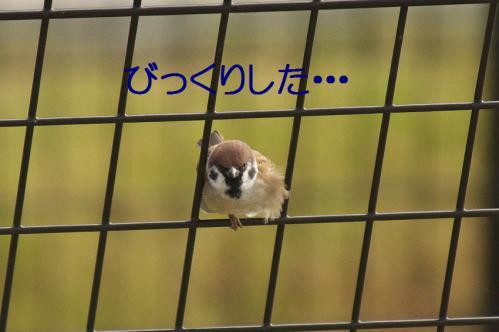 110_20121103224851.jpg