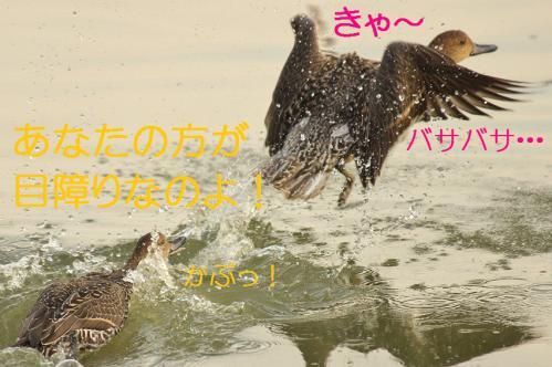 110_20121112215353.jpg