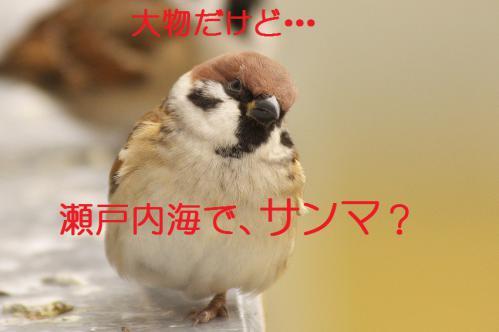 110_20121125192423.jpg