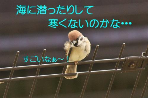 110_20121201214913.jpg