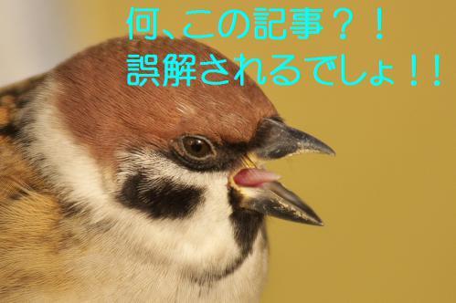 110_20121202192210.jpg