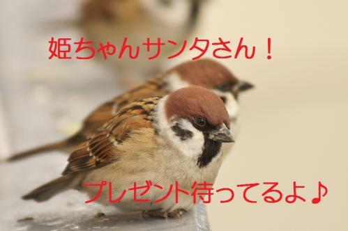 110_20121203224119.jpg