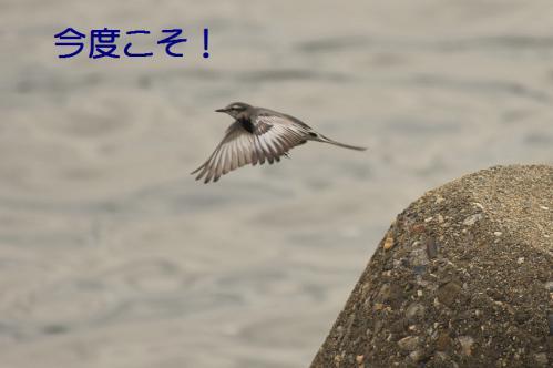 110_20121205221504.jpg