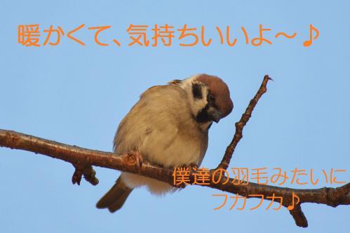 110_20121206193550.jpg