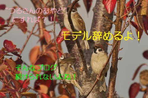 110_20121209222844.jpg