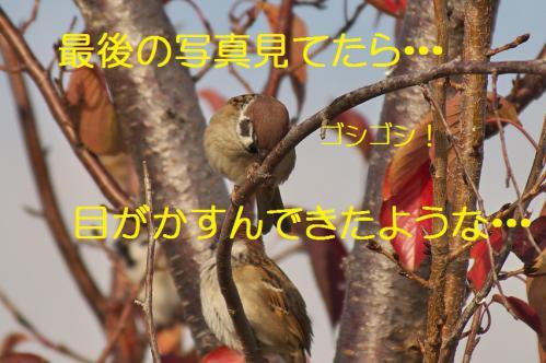 110_20121213214645.jpg