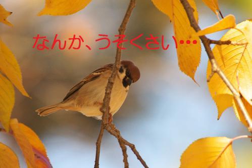 110_20121214214828.jpg