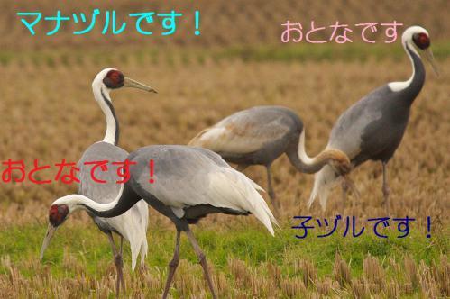 110_20121215200834.jpg