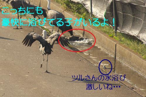 110_20121218215712.jpg