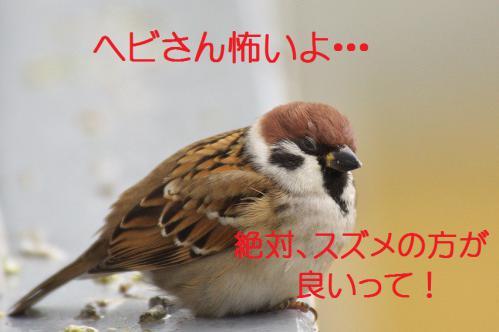 110_20121228215752.jpg