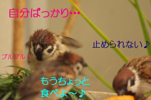 110_20121230221408.jpg