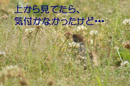 115_20120531225212.jpg