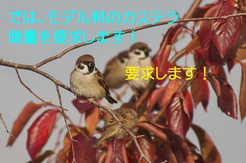 115_20121209222919.jpg