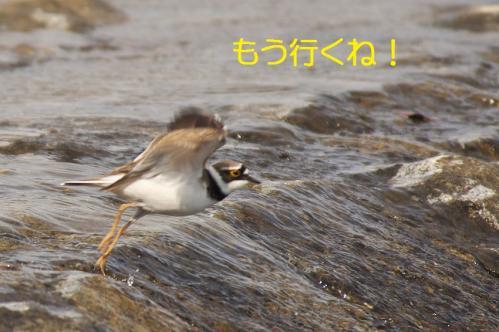 120_20120426195346.jpg