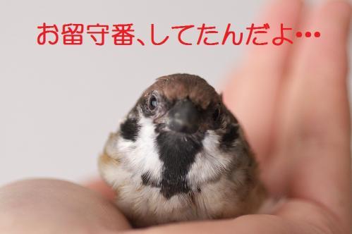 120_20120513225507.jpg