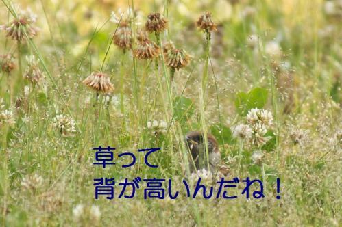 120_20120531225253.jpg