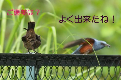 120_20120612215108.jpg