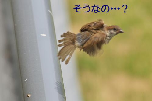 120_20120711222547.jpg