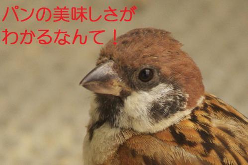 120_20120821211009.jpg