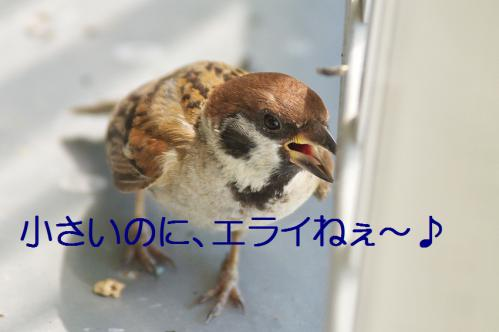 120_20120822221831.jpg