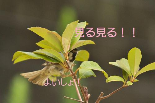 120_20120831220132.jpg