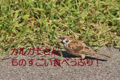 120_20120928220411.jpg