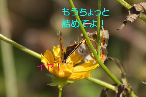 120_20120930203806.jpg