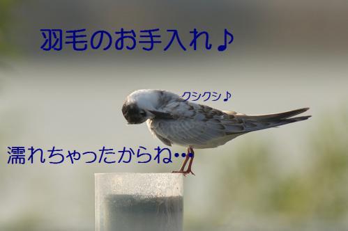 120_20121009191651.jpg