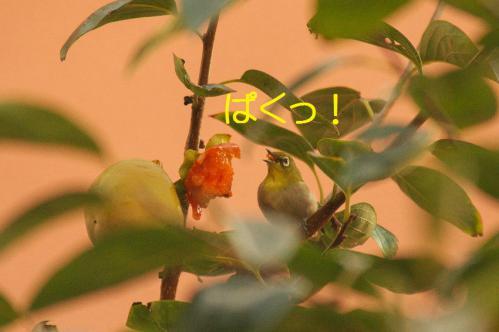 120_20121030223205.jpg
