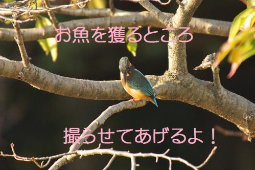 120_20121102220217.jpg
