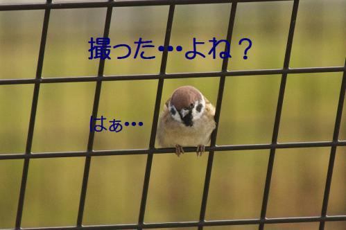 120_20121103224850.jpg