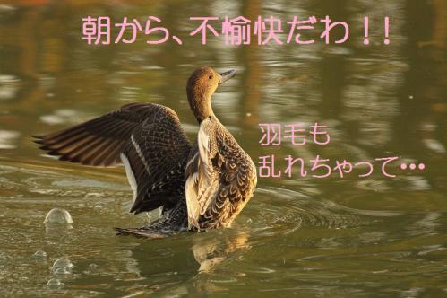 120_20121112215352.jpg