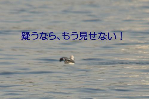 120_20121125192427.jpg