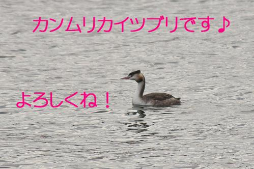 120_20121130220804.jpg