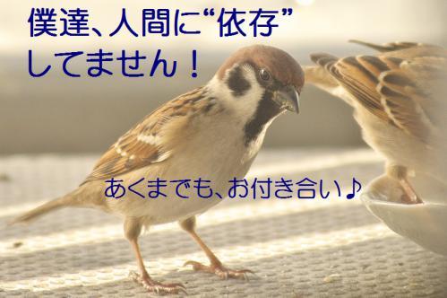 120_20121202192213.jpg