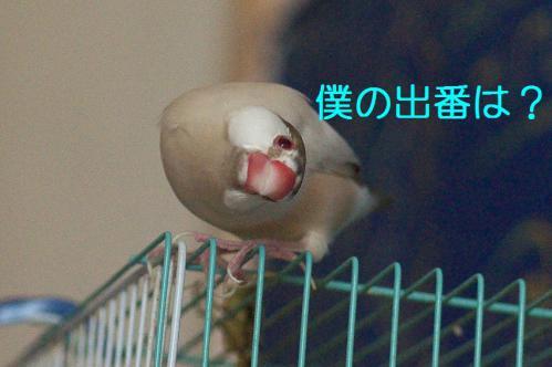 120_20121203231321.jpg