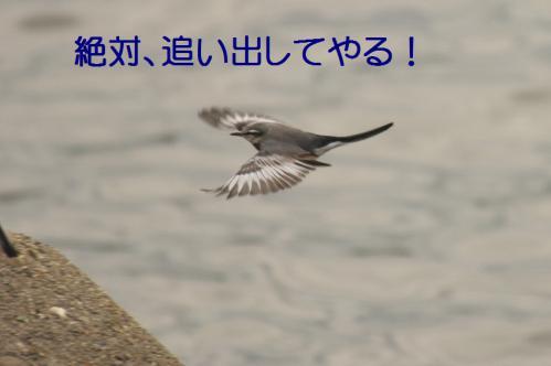 120_20121205221507.jpg