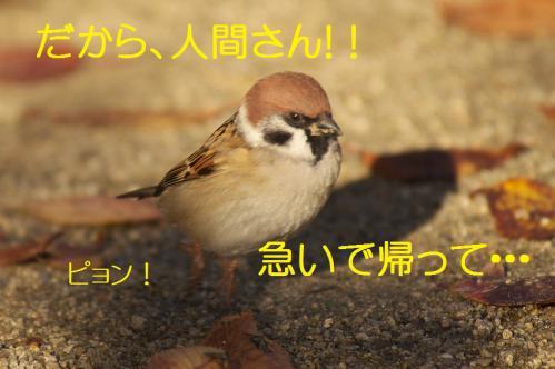 120_20121206193553.jpg