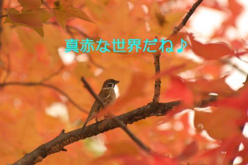 120_20121206222512.jpg