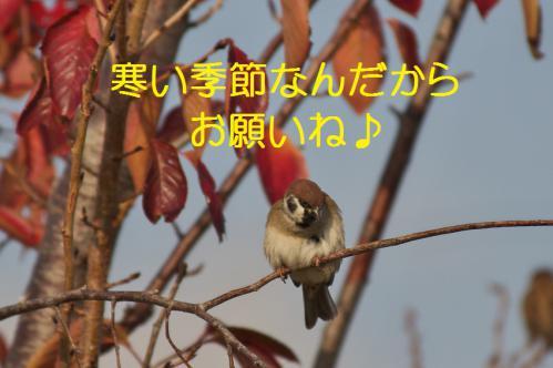 120_20121209222924.jpg