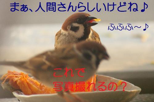 120_20121212214530.jpg
