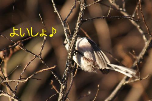 120_20121214214928.jpg
