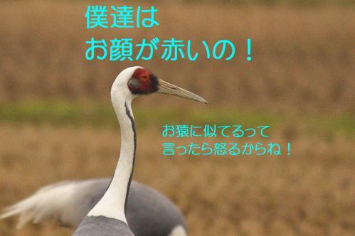 120_20121215200837.jpg