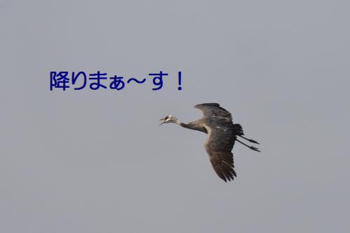 120_20121216202815.jpg