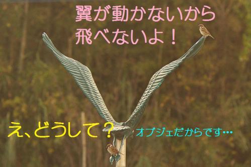 120_20121217024701.jpg
