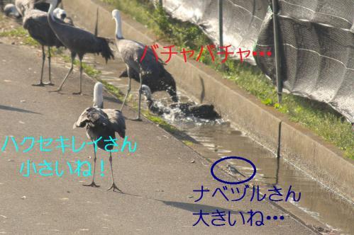120_20121218215716.jpg